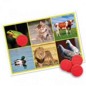 Bingo:  animali e la natura